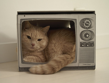 cat-in-tv